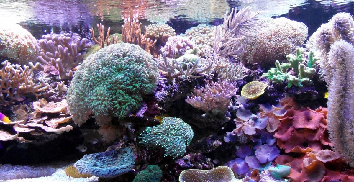 opvoerpomp aquarium   Matras Kinderwagen com