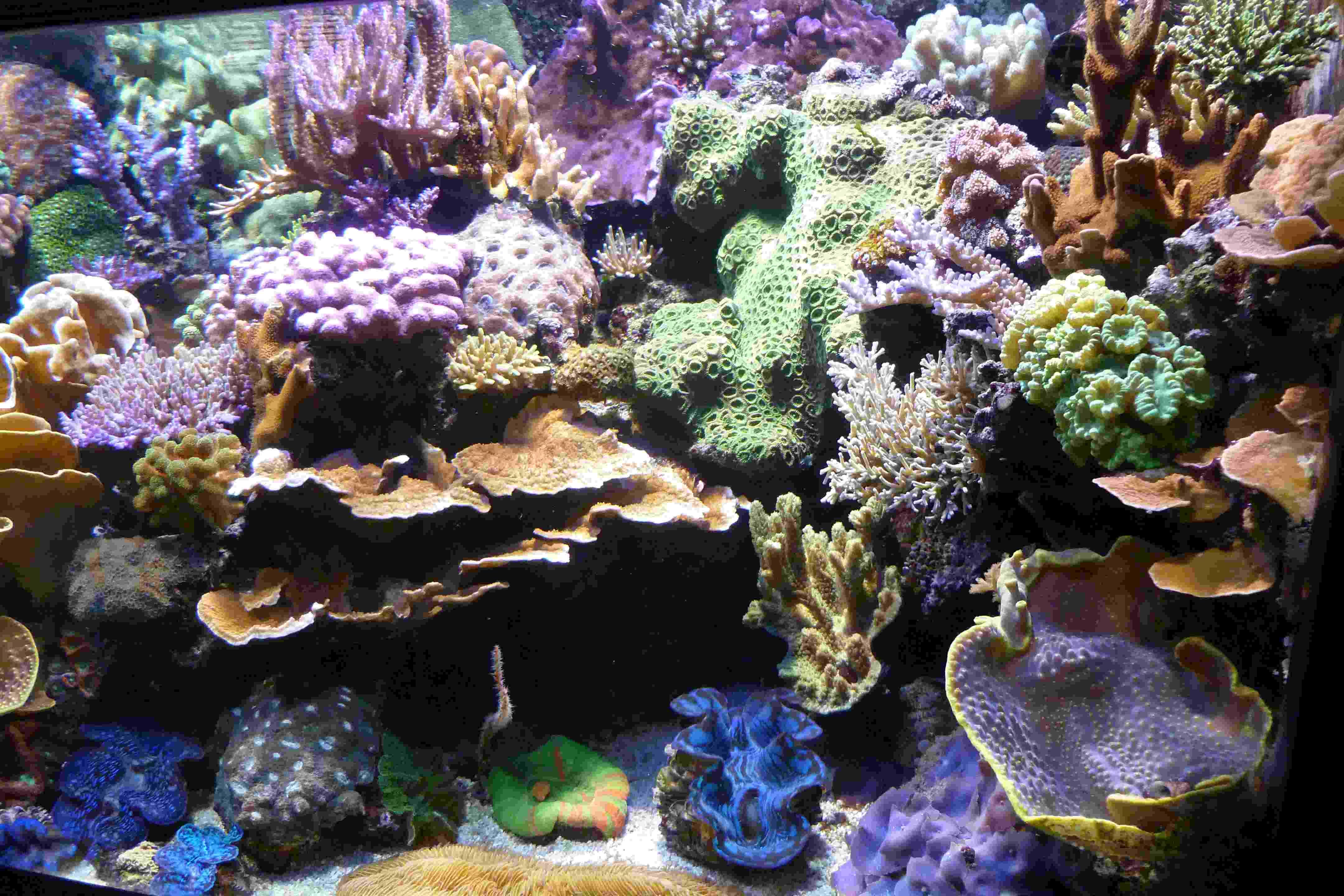 Aquarium F u00fcr Krabben  Tierbesatz im aquarium garnelen schnecken und fische richtig