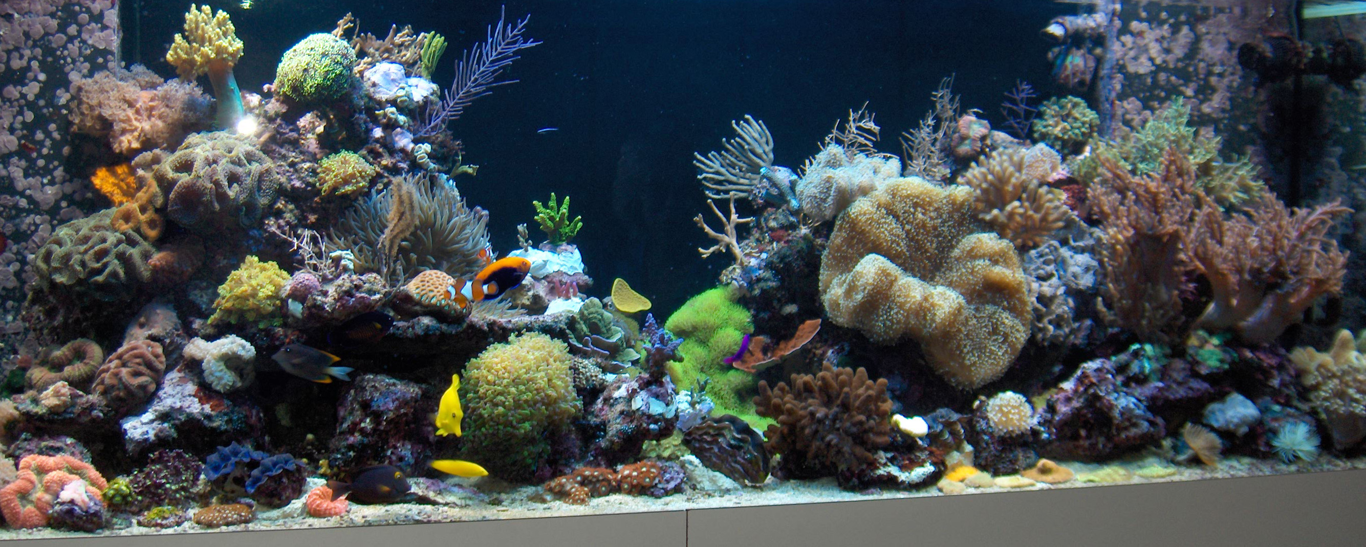 Zoetwater Aquarium Kopen  Atlantik compact 24 inch kubusrif aquarium u2022 orphek  Alles over de