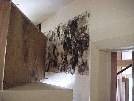 Schimmel In Huis : Vocht en schimmelvorming in huis