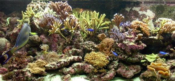 mijn aquarium verlicht met 5xt5 80w kleur 880 8000k