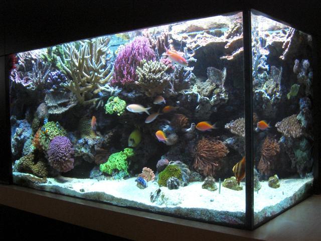 Reefsecrets   Portal voor de  u00e9chte zeeaquariaan
