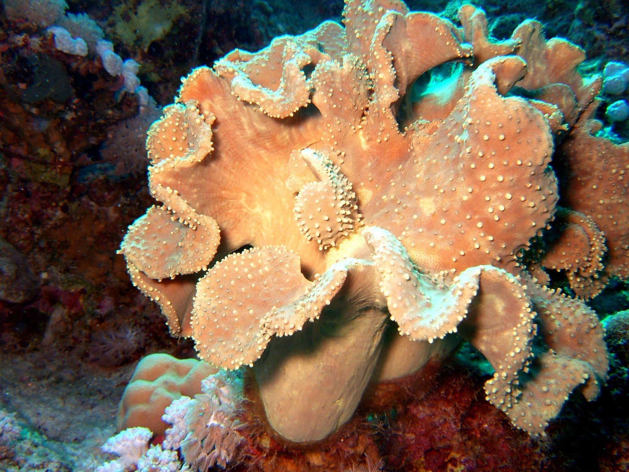 Reefsecrets - Portal voor de échte zeeaquariaan