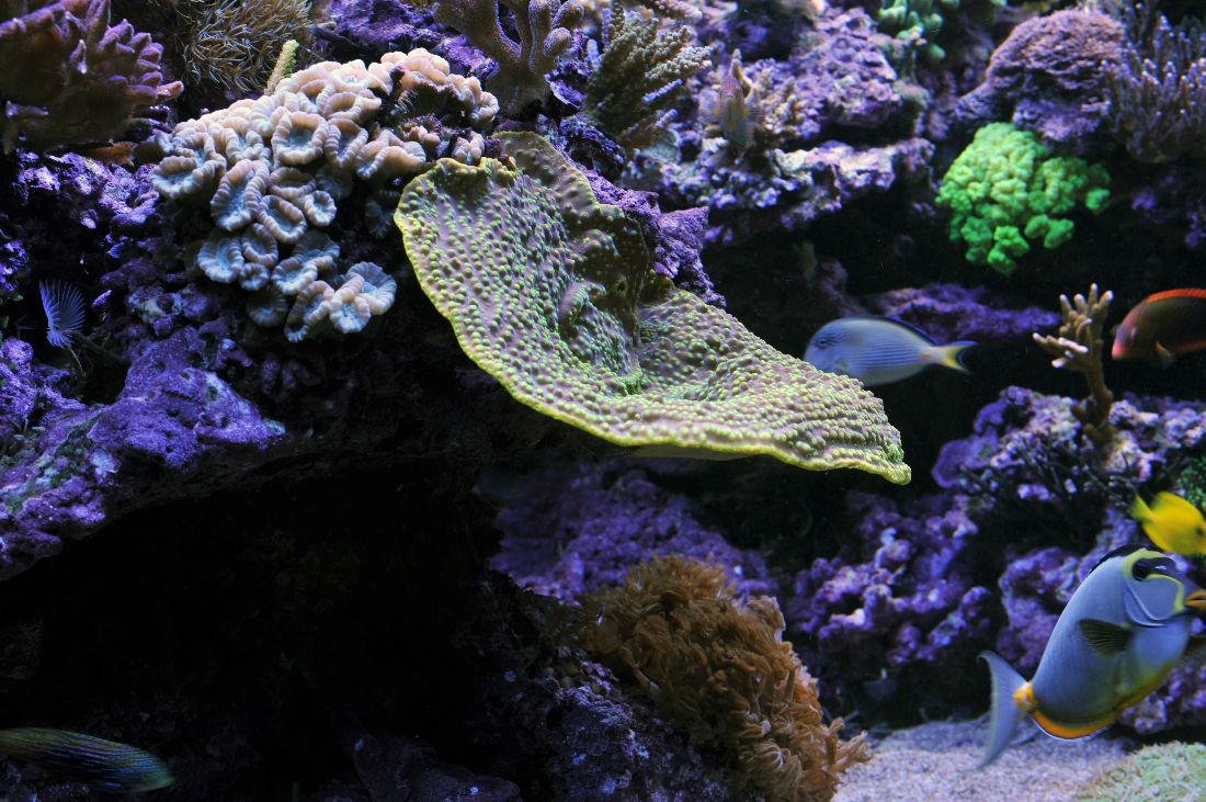 Reefsecrets   portal voor de échte zeeaquariaan